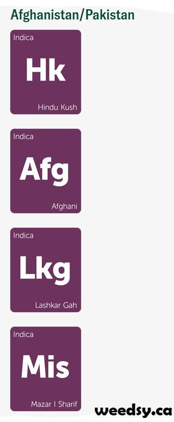 Afghanistan-Pakistan - Landrace Strain