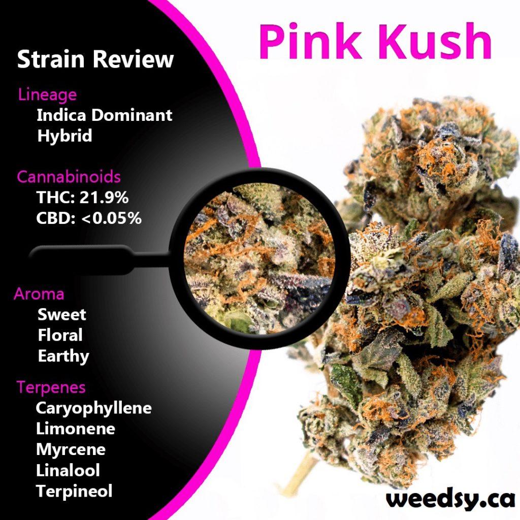 PinkKush-weedsy