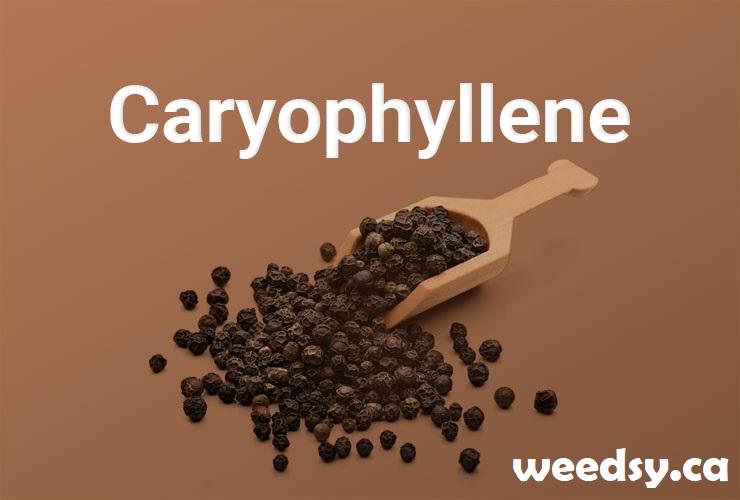 Terpene - Caryophyllene