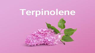 TERPINOLENE