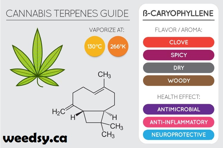 terpenes-for-pain