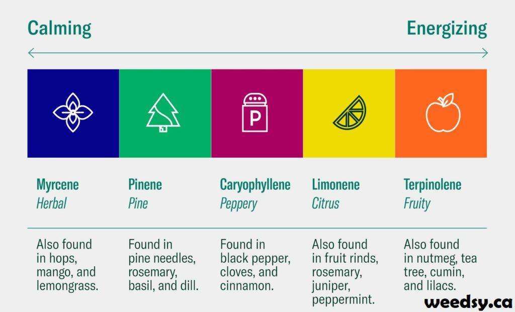 Terpenes Guide