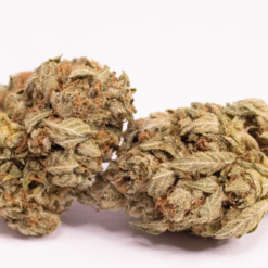 Online Dispensary Canada - Granddaddy Purple Double